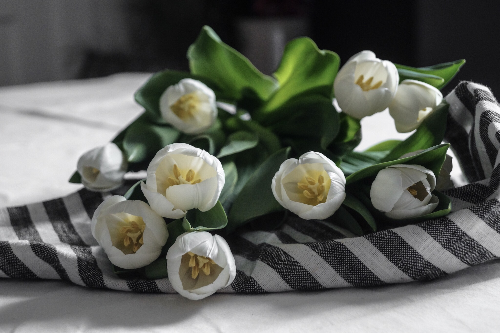 white tulips for spring, tulips, tulip arrangement, flower arrangement simple, flower arrangement for table