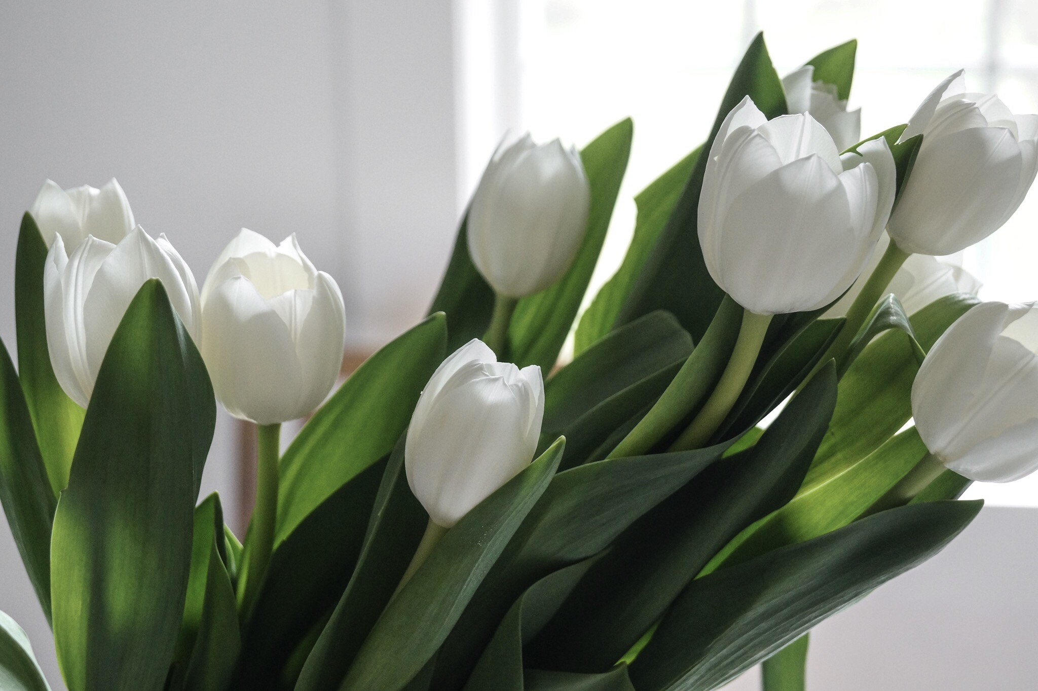white tulip arrangement for spring, easy tulip arrangement, tulip arrangement for table, flower arrangement simple, white tulips